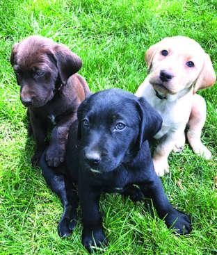 Craigslist Great Falls Montana Pets